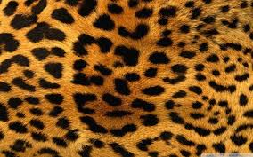 cheetah-fur
